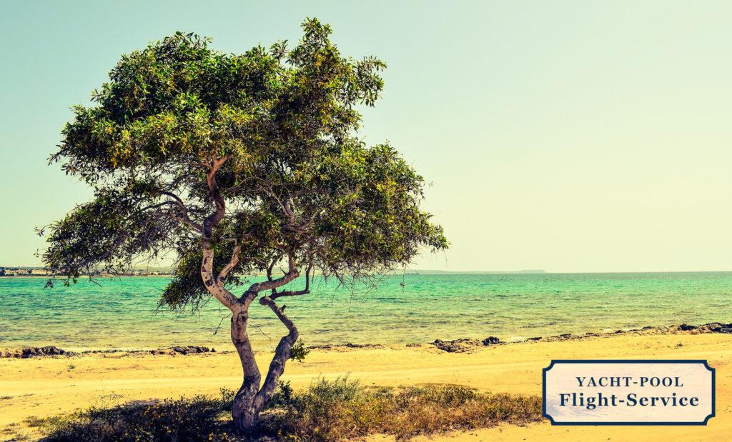 Küste, Mittelmeer, Baum am Strand, trocken